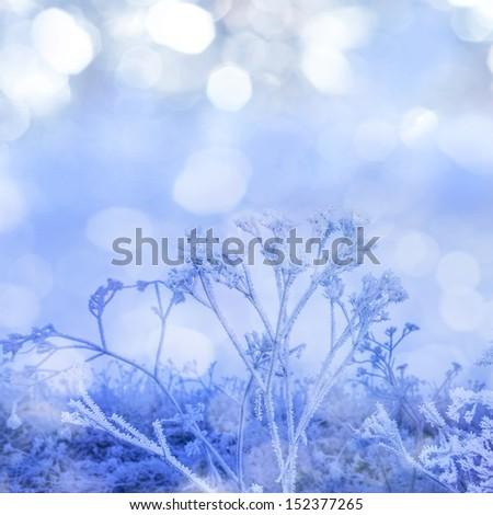 winter frozen plant - stock photo