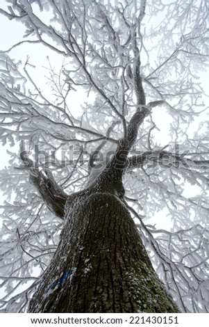 Winter frozen tree with mist at day - stock photo