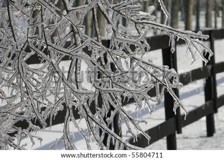 winter frozen trees - stock photo