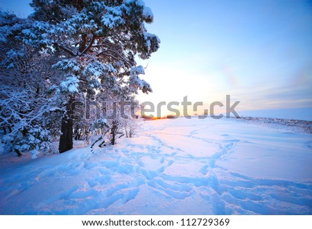 Winter frozen trees in a snowy field at sunset - stock photo