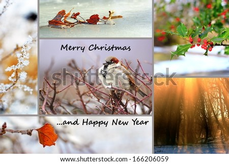 winter greeting card, collage with nature images for christmas and new year - stock photo