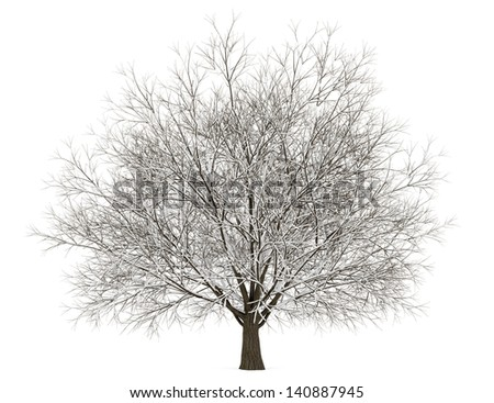 winter hornbeam tree isolated on white background