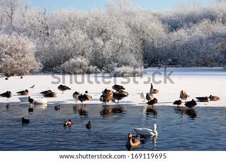 Winter ice at the lough in Cork city in Ireland Europe - stock photo