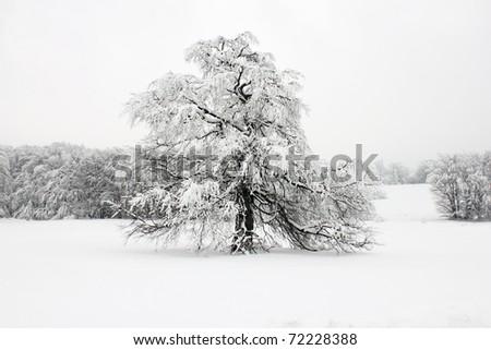 Winter idyll - stock photo