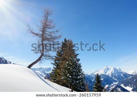 Winter idyll with tree - stock photo
