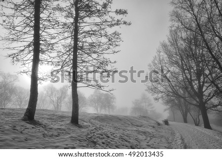 Winter in a cold and foggy park