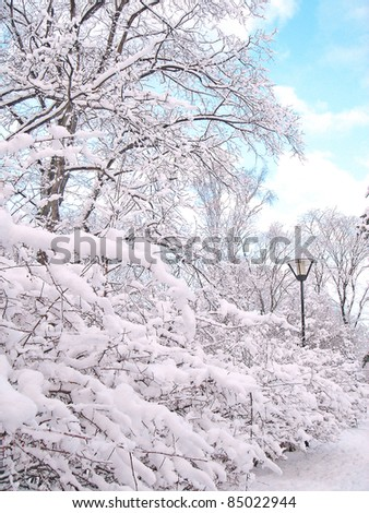 Winter in City Park - stock photo