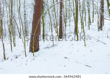 Winter in european forest. Beautiful landscape with snow covered trees, branches and ground.