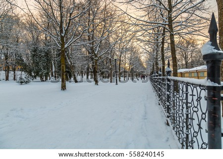 Winter In Kadriorg Park