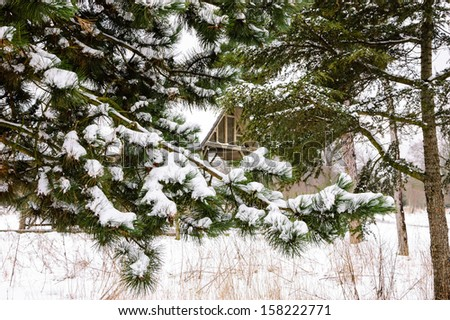 Winter in park. Snow on pine tree twigs. Wooden arbor at backgrounds. - stock photo