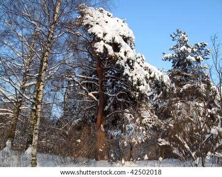 Winter in Russia - stock photo