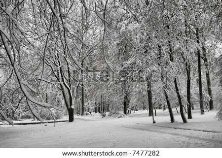 Winter in the city park.  Central Europe.