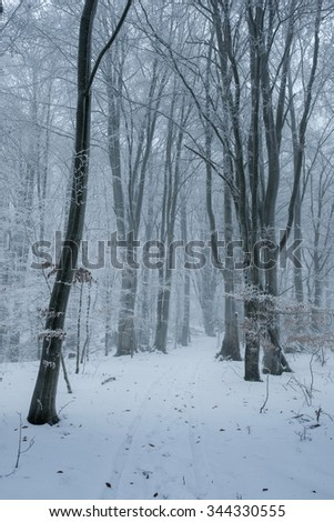 winter in the forest, romanian carpatians