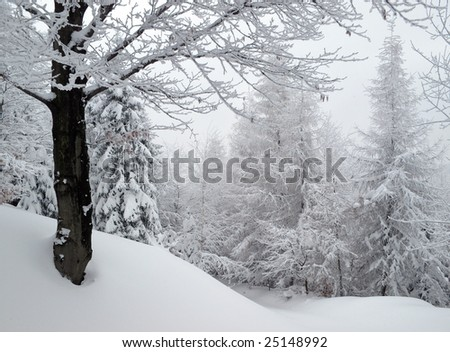 winter in the mountains - stock photo