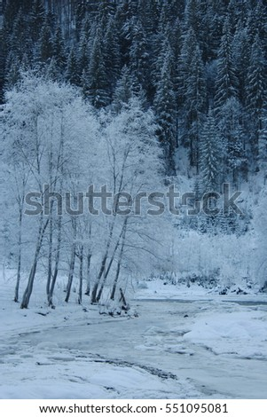 Winter in the mountains. Beautiful winter landscape. trees in the snow