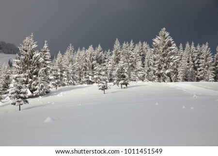 winter in the mountains - snow covered fir trees - Christmas background