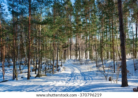 Winter in the pine forest with snowy road during sunny day