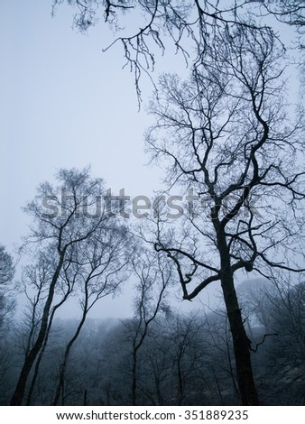 Winter in the wet cold spooky woods with tall scary trees