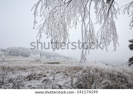 Winter landscape and snow wrapped trees in Sumava, Czech republic. Frost-covered meadows and frosted trees in the Sumava. South Bohemia.