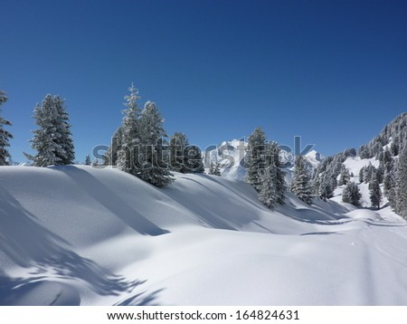 Winter landscape and winter forest - stock photo
