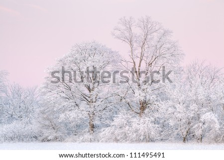 Winter landscape at dawn of a snow flocked forest, Fort Custer State Park, Michigan, USA - stock photo