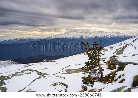 Winter landscape at sunset over alpine valley and snowcapped mountain range with little pine tree. Frozen pattern on the ground and cold feeling. Italian Alps. - stock photo