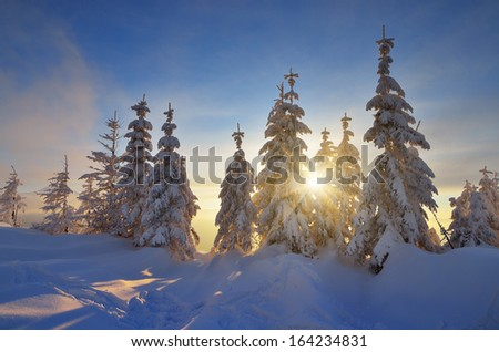 Winter landscape at sunset. Sunbeams in the branches of trees covered with snow. Carpathian mountains, Ukraine, Europe - stock photo