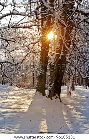 Winter landscape . Beautiful warm sunset in the cold forest. - stock photo