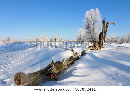 winter landscape big snag in the snow in sunny frosty morning - stock photo