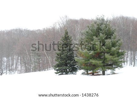 Winter landscape during snowfall - stock photo