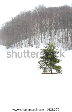 Winter landscape during snowfall with standalone pine tree - stock photo
