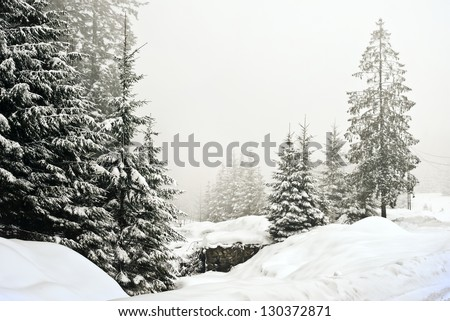 Winter landscape foggy scene with Christmas trees forest - stock photo