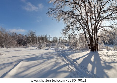 Winter landscape. Forest and trees in the snow - stock photo
