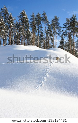 Winter landscape frosty January day with snowdrifts and trees - stock photo