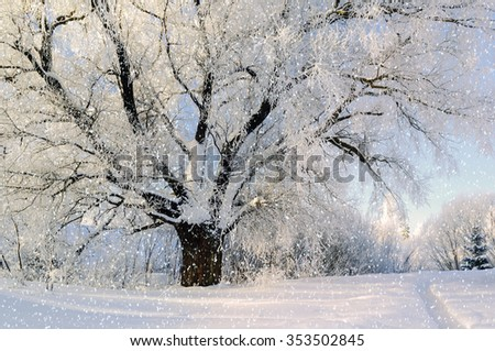 Winter landscape - frosty spreading tree under the snowfall in the forest     - stock photo