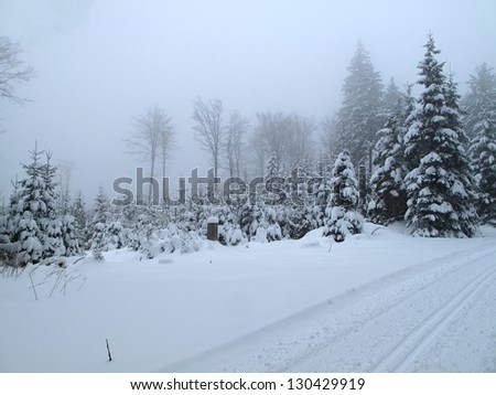winter landscape in foggy