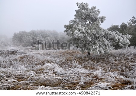 Winter landscape in mountains with frost, dry grass and pine trees - stock photo