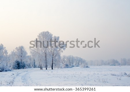 Winter landscape in Siberia, trees, snow cover - stock photo