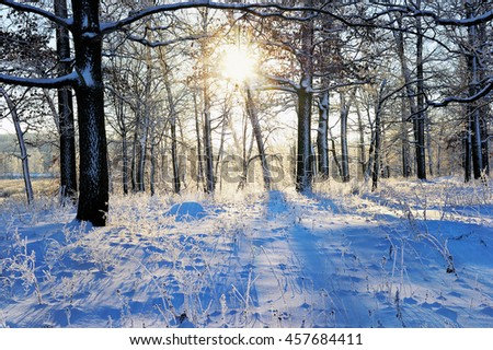 winter landscape in the forest with the morning sun.