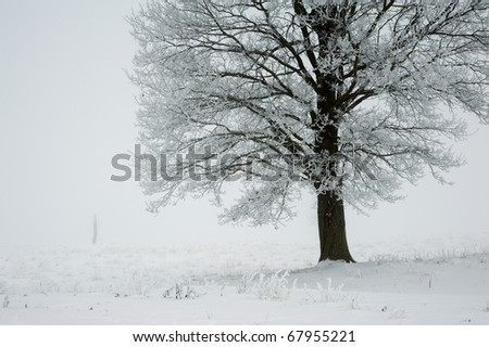Winter landscape in the mist