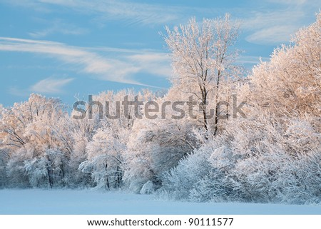 Winter landscape of a snow flocked forest, Fort Custer State Park, Michigan, USA - stock photo