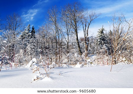 Winter landscape of a sunny forest after a heavy snowfall