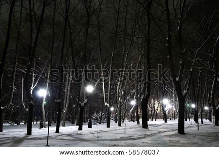 Winter landscape of city park at night - stock photo
