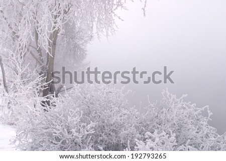 Winter landscape of dense fog on the river ice and trees covered with frost on the shore