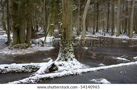 Winter landscape of first snow in old forest and  frozen water with broken tree in foreground - stock photo