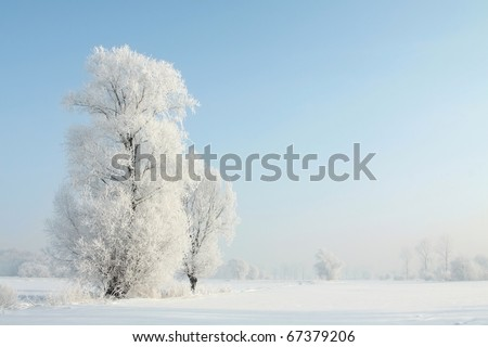 Winter landscape of frosted trees against a blue sky on a sunny morning. - stock photo