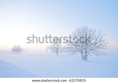 Winter landscape of frosty trees on foggy background - stock photo