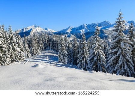 Winter landscape of High Tatra Mountains on Rusinowa Polana after fresh snowfall, Poland