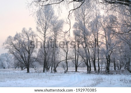 winter landscape of oaks and dry grass in the frost by the river at sunset