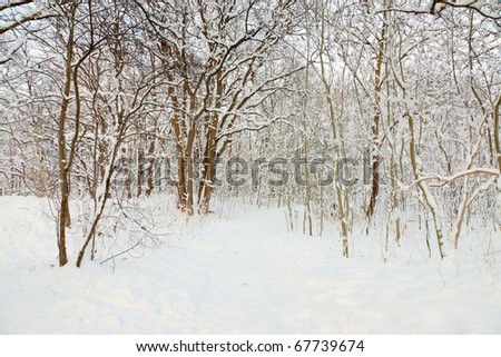 Winter landscape of path with trees covered with snow